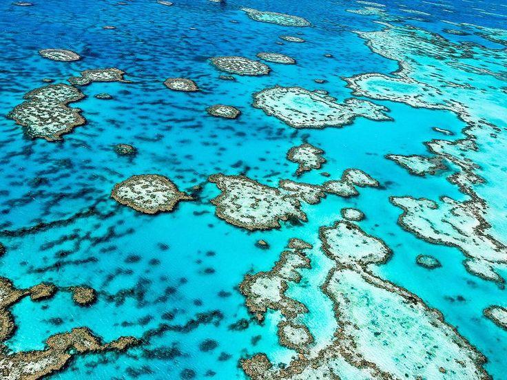 Gidene kadar buranın gerçekte var olup olmadığını düşünmeniz doğal. Büyük Set Resifinin mercan kayalıkları ve göz alıcı mavi tonu kameranıza sıkı sıkı sarılmanıza neden olacak. Güne erken başlayıp deniz kuşu sürülerinin geçişini izleyebilir suyun altına dalıp mercanları rengarenk balıkları ve deniz kaplumbağalarını karelerinize sığdırmaya çalışabilirsiniz. #greatbarrierreef #coralreef #cntravellertr #australia #buyuksetresifi by cntravellertr http://ift.tt/1UokkV2