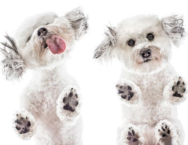 HA! Love this! Plexiglas Pet Photography 2   Flickr - Photo Sharing!