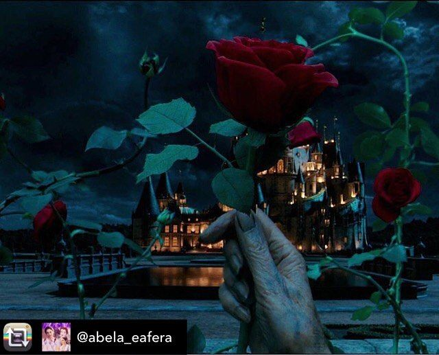 Repost from @abela_eafera using @RepostRegramApp - ✨ - Era Uma Vez... #abelaeafera2017 @beautyandthebeast ❤️ . ... ... ... Via @laesmeraldadisney #abelaeafera #belaeafera #belaefera #princesa #castelo #rosa #rosavermelha #rosaencantada #filme #disney #emmawatson #danstevens #disneymovie #labellaylabestia #labelleetlabete #abelaeomonstro #beautyandthebeast #belle #beast #belleandbeast #rose #redrose #enchanted #enchantedrose #spell #castle #taleasoldastime #beourguest #beautyandthebeast2...