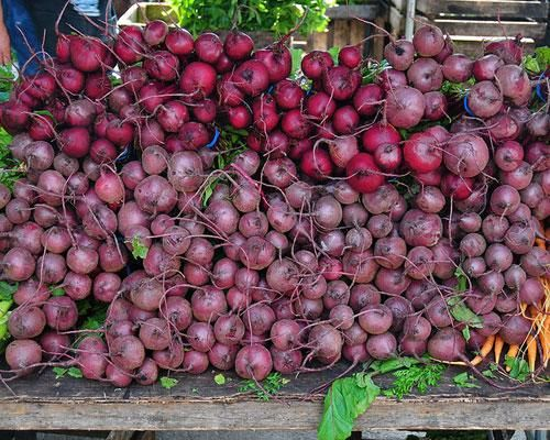 49 best Growing Beets images on Pinterest Gardening tips