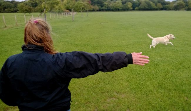Here's how to train your dogs using Hand Signals. #dogs #training ...