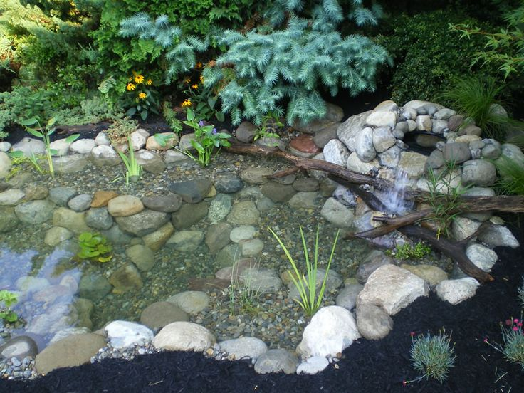 43 best images about water garden on pinterest pond for Goldfish pond ideas