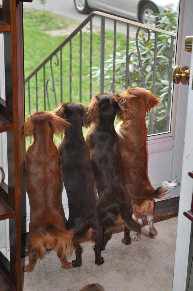 The watch dogs :)