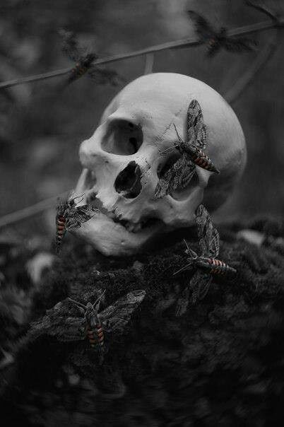 beautiful macabre skull and moths , halloween gothic art photo
