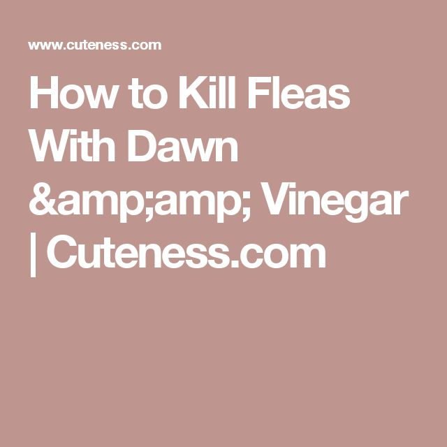 25 Best Ideas About Killing Fleas On Pinterest Dog Flea