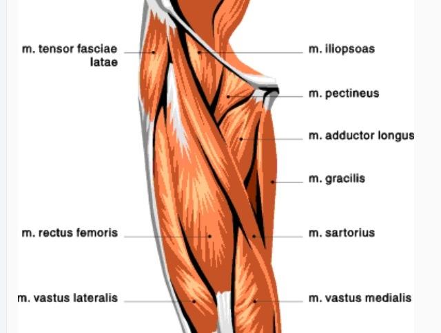 70 Best Anatomy Images On Pinterest