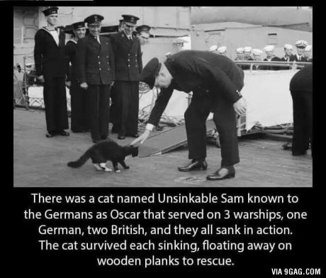 Unsinkable Sam, the most interesting cat in the world - #WWII #Navy #Cats