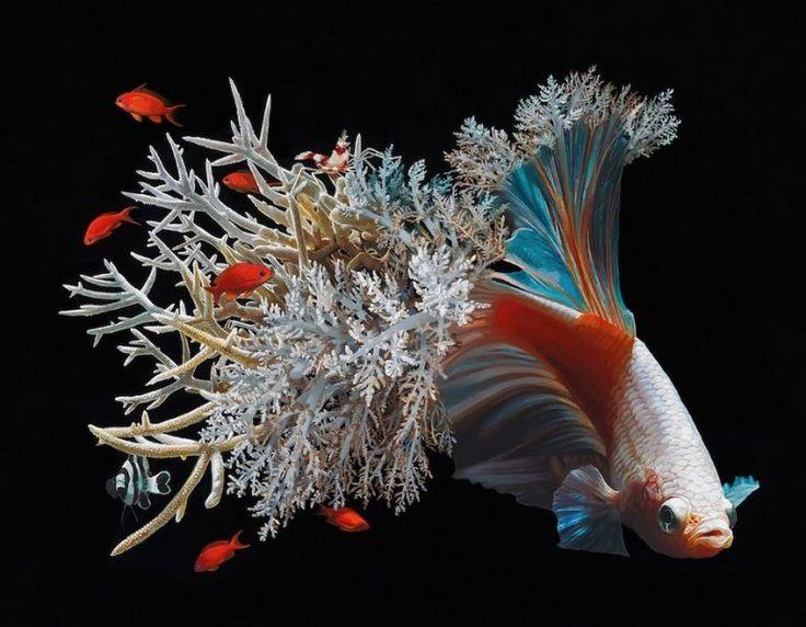 Des peintures de poissons fusionnant avec le corail par Lisa Ericson - Dessein de dessin