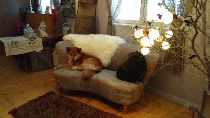 miun verhoama sohva ja koiruliini
