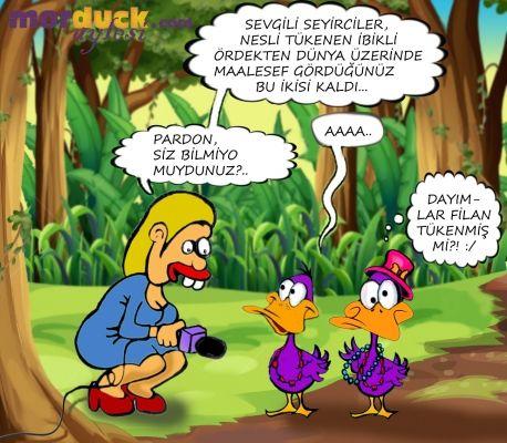 Nesli Tükenen İbikli Ördek - Morduck.com Aylesi