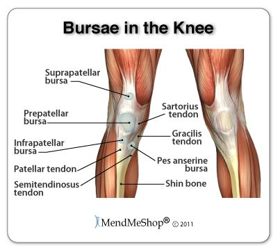 Distribution of the bursae (lubricating pockets) around the knee. These are normal structures, but when there is inflammation in a bursa it fills with fluid and can become hot and painful.