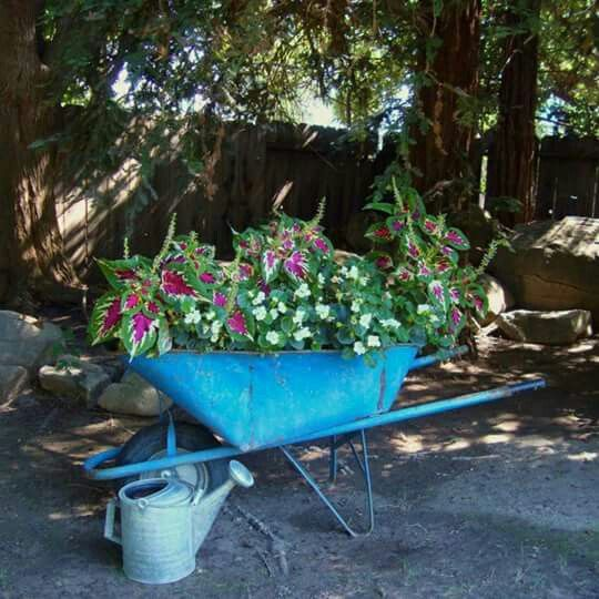 Flower Garden Ideas With Old Wheelbarrow 41 best wheelbarrow planters images on pinterest | wheelbarrow