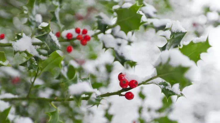 Zimozielone rośliny liściaste – które wybrać do ogrodu?