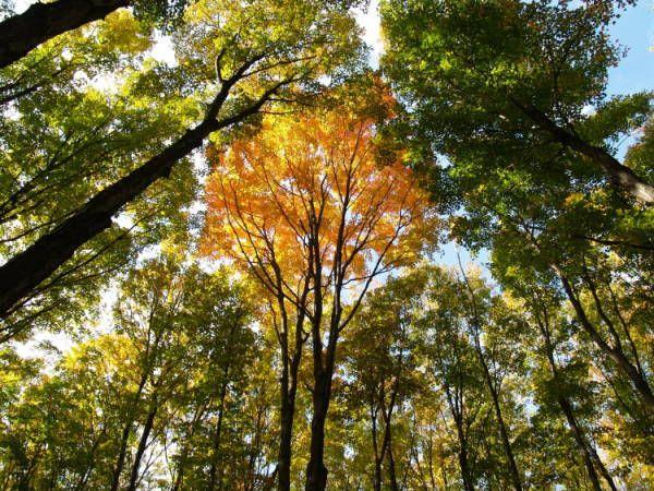 Louis M. Groen Nature Preserve - Gaylord Area Convention & Tourism Bureau