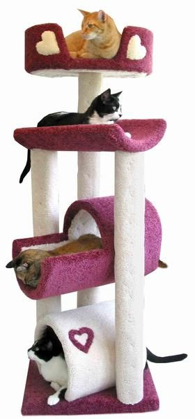 """""""Bunk-Style"""" Bed Design for Cats."""
