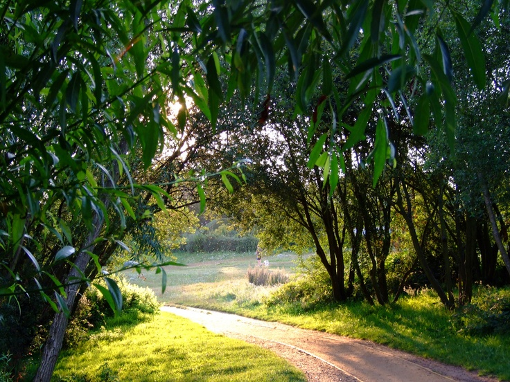 Petersfield Heath