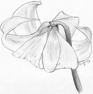 Best 20+ Pencil sketches of flowers ideas on Pinterest   Pretty ...