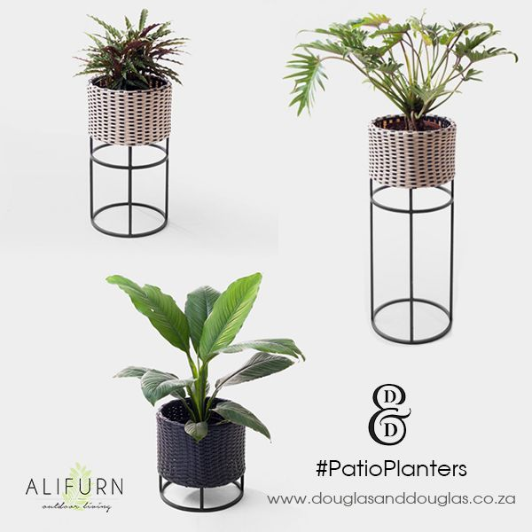 Thought patio planters were a fad in your grandparents' day? They were, and they're back in! Here's how to use patio planters on your patio… #OutdoorFurniture #PimpMyPatio http://www.alifurn.co.za/using-planters-patio/