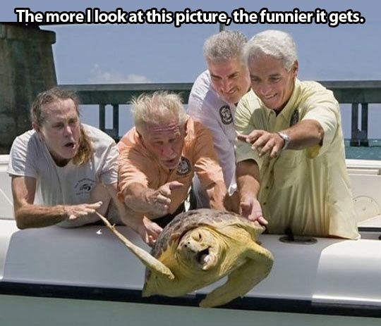 Turtle escape…at 1st I was sure this was photoshopped, then I realized that was former FL governor Charlie Crist, so I Googled it, & there's a video, too.