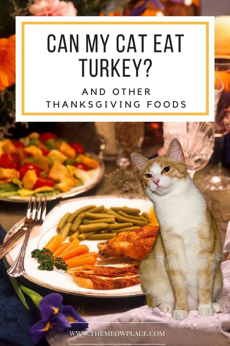 Thanksgiving foods are a big part of the holiday season. We all enjoy chowing down on a delicious roasted turkey with sides of cranberries, mashed potatoes and pumpkin pie. But which foods are safe for cats to eat? Double tap the picture to find out what Thanksgiving foods you should avoid giving to your cat.
