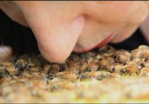 Macrosmatic- Having a good sense of smell