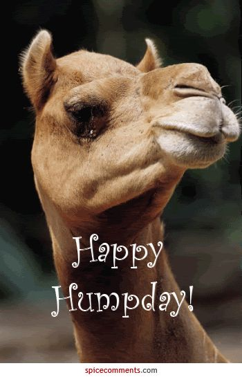 Happy Hump Day Photo:  This Photo was uploaded by BillyGunn1701. Find other Happy Hump Day pictures and photos or upload your own with Photobucket free i...