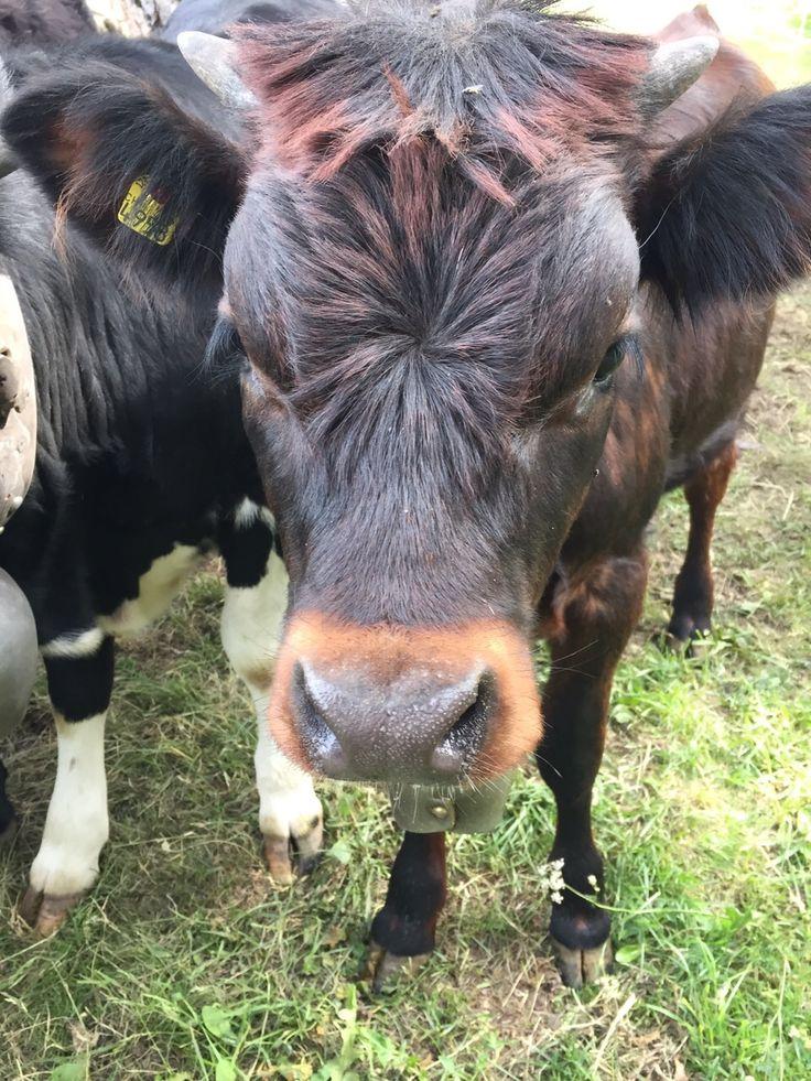 Local wildlife - baby cow