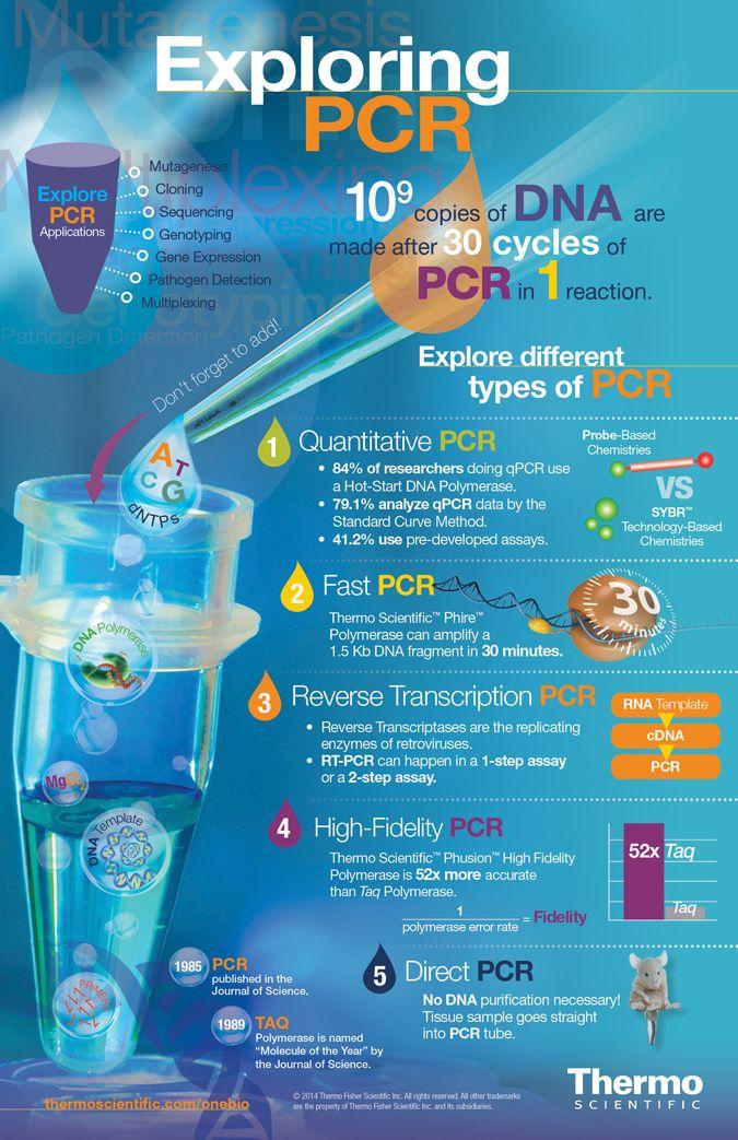 PCR Infographic