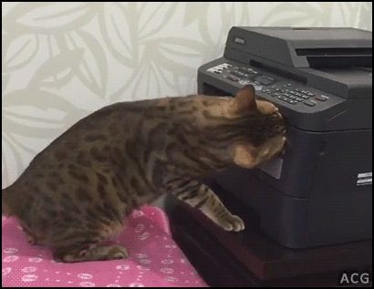 """ACG • CAT GIF • Funny office Cat inside photocopier because he has no time to lose. """"Wait I can fix that."""""""