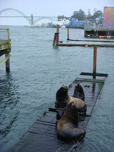 Newport Oregon, the bay is supposedly a good place to see seals and sea lions