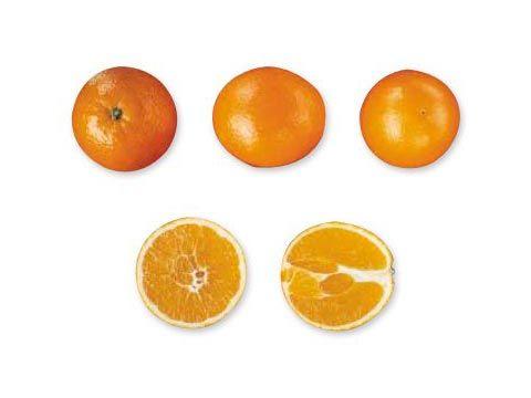 Naranjas Navel Newhall