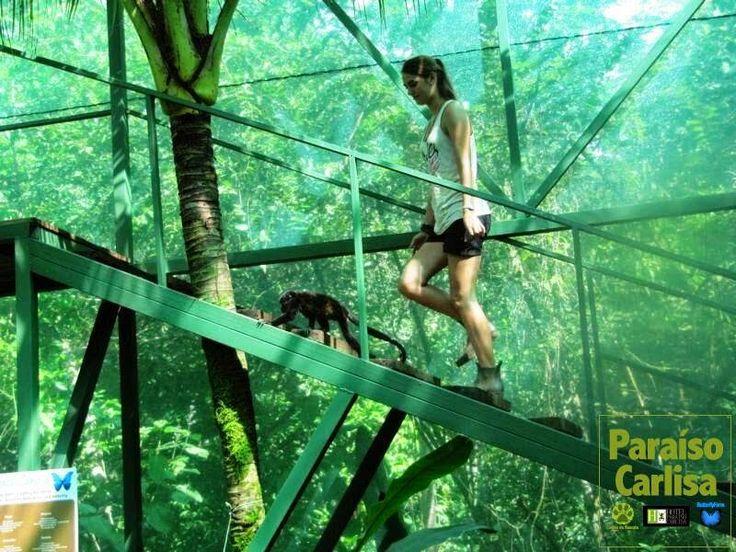 Paraíso Carlisa · Costa Rica: ECOLOGICAL HOTEL Costa Rica! For 2 people. Breakfa...