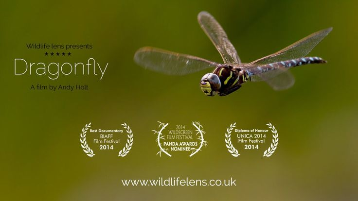 Dragonflies are a colourful and distinctive feature of fresh water habitats. While many of us think of the colourful acrobatic aerial hunter, this is only a small…