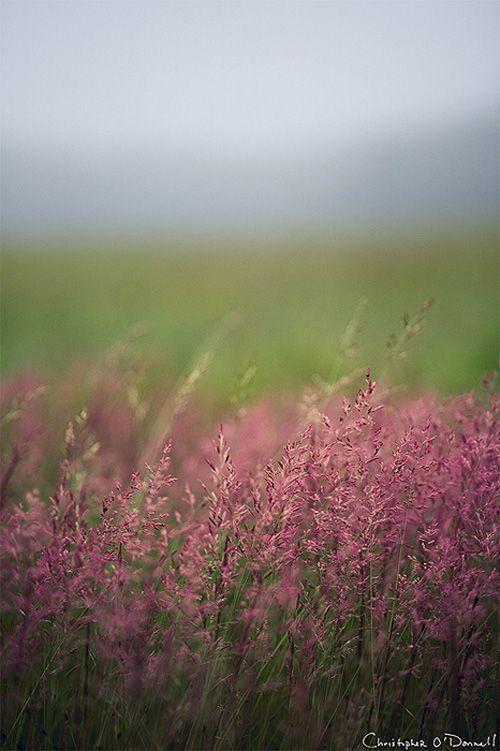 Fotografische Themen: Landschaften. Artikel und Foto von Christopher O'Donnell