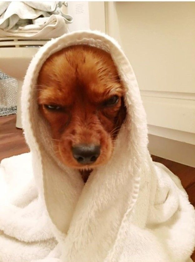"""""""You will live to regret this. Someday. Somehow."""" 27 Dogs Who Really Hate Taking Baths"""