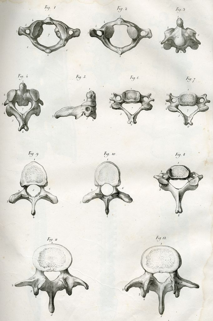 Vertebres | by Center for Image in Science and Art _ UL