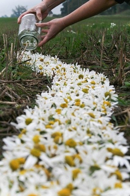 instead of a runner, line the aisles with daisies like this.