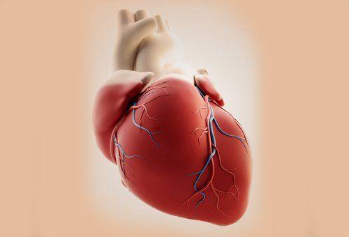 Cuidar al corazon