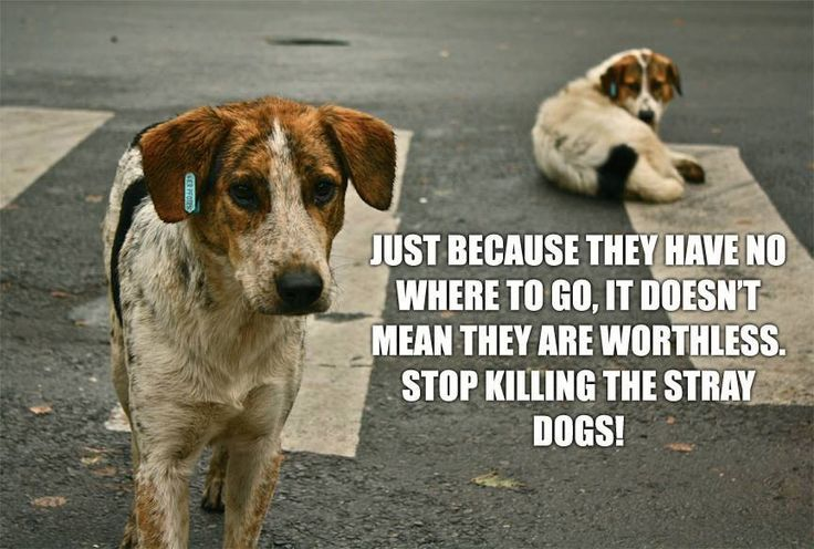Stop killing stray dogs....rescue them.