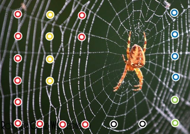 Spinnen by Jack Nowee