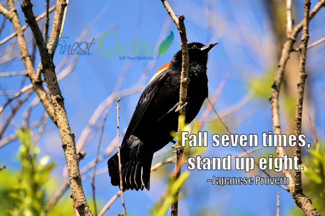fall seven times... stand up eight --- japanese proverb