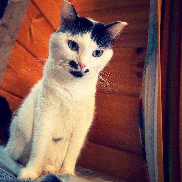 ウッドデッキから降りないという約束を破ったのでお尻ペンされたしと。いつものスキンシップと同じ尻ペンなんですがシチュエーションで分かるようです。 #catstagram#pet#cats#neko#ilovecat#にゃんこ#ネコラ部#モフモフ#保護猫#愛猫#love#lovely#cute#funny#meow#instacat#変顔#顔芸#kawaii#sippo#猫写真#ショボン#お尻ぺんぺん#