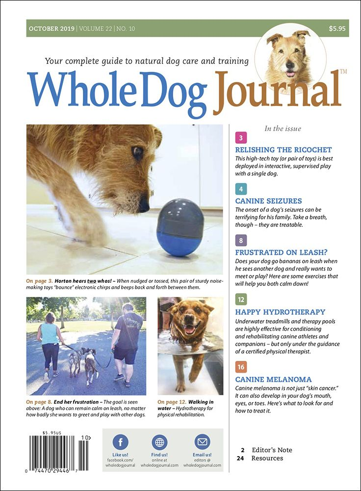 Download The Full October 2019 Issue Dogs Dog Training