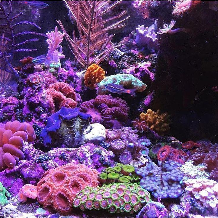 Die besten 25 riff landschaften ideen auf pinterest for Salzwasser aquarium