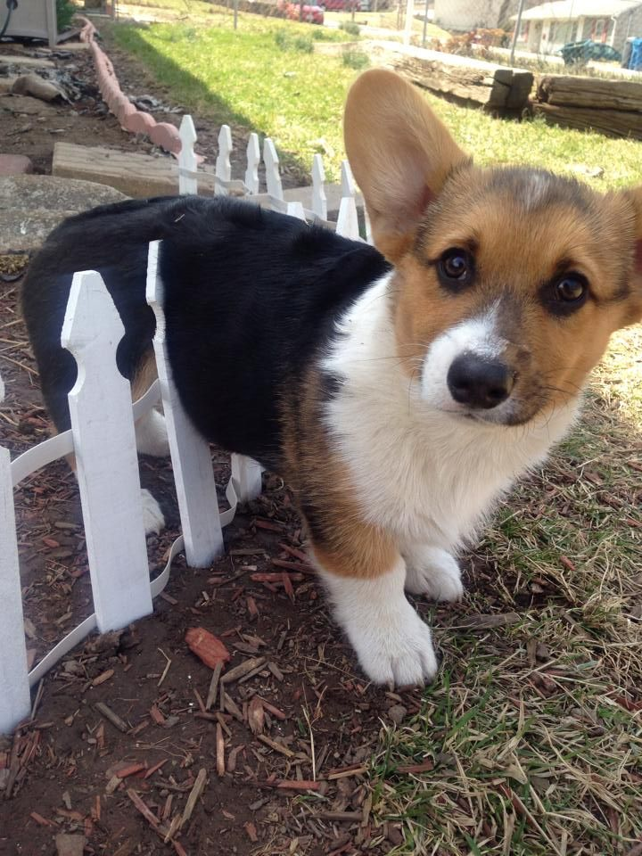 Awwwww!! ;) Never leave your puppy alone, or they will try  to escape, but eventually just get stuck..