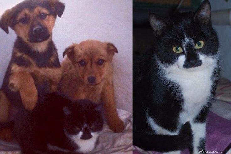 В Анапе кот кормил брошенных щенков мышами - В мире животных