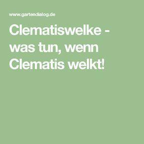 Clematiswelke - was tun, wenn Clematis welkt!