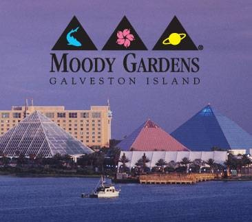 Best 25 Galveston Moody Gardens Ideas On Pinterest Galveston Aquarium Galveston State Park
