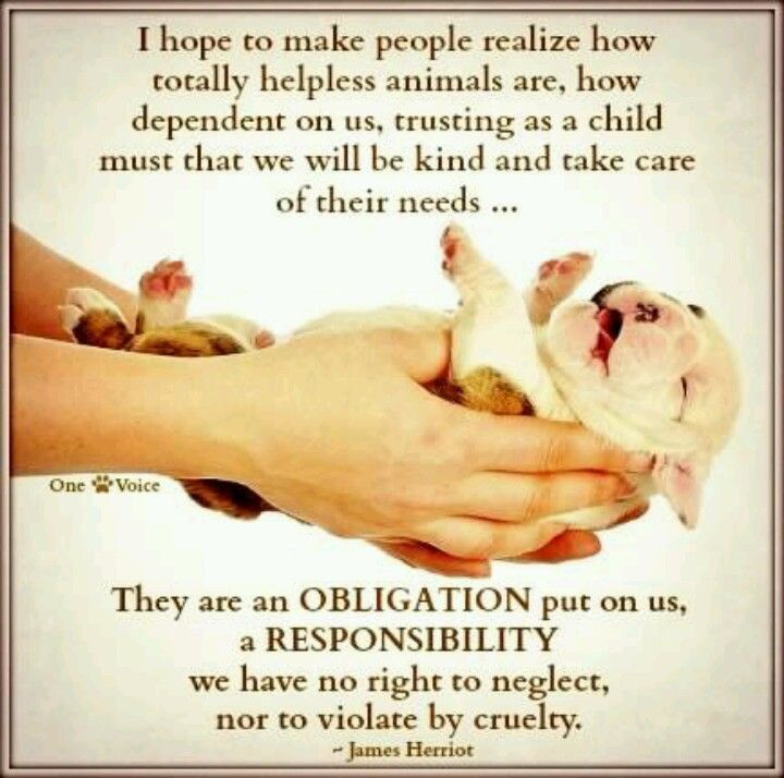 #animal rights #compassion  #animals
