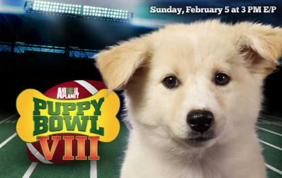 I dream of adopting one of the Puppy Bowl contestants.